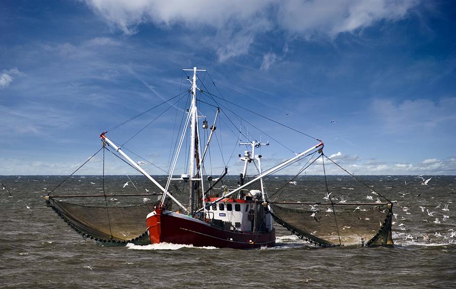 Рыболовный трал
