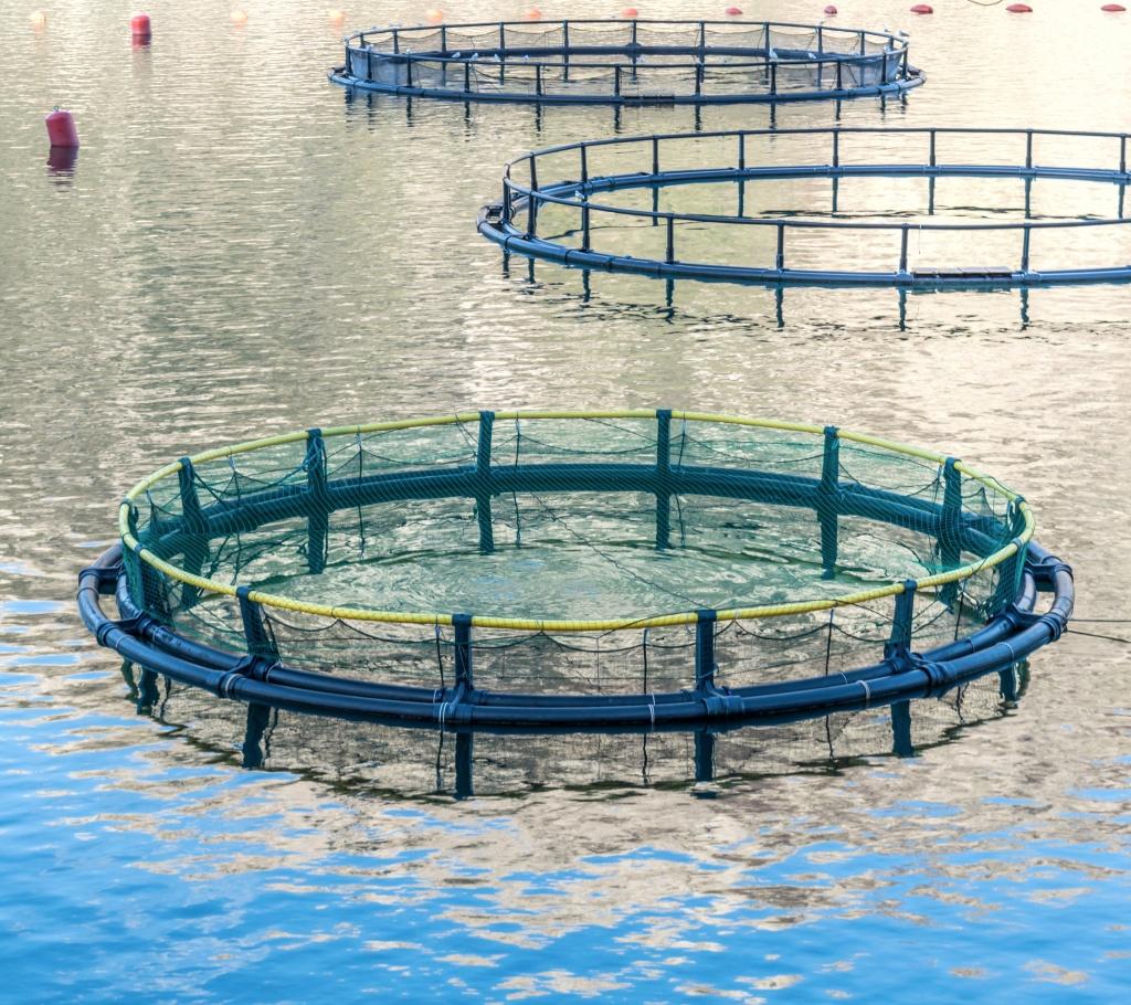Фото садков для выращивания рыбы