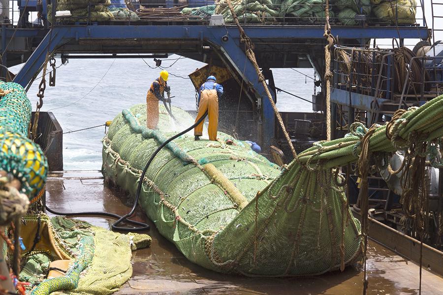 Трал рыбы, выборка трала - подъем на борт