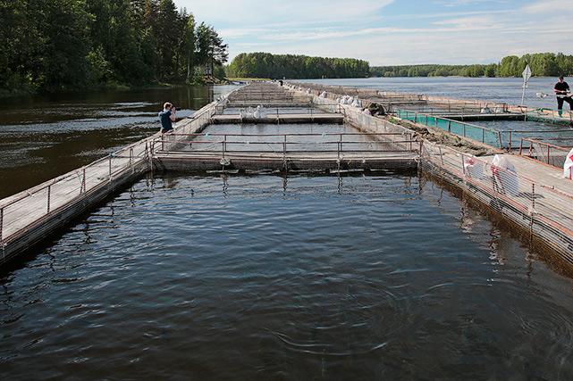 Если естественных источников наполнения нет, водоем строится с применением замкнутого водоснабжения.