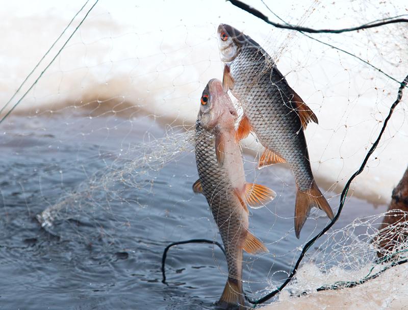 Виды рыболовных сетей - одностенные сети