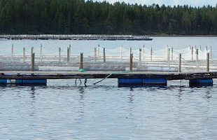 Barrel Floated Net Pens